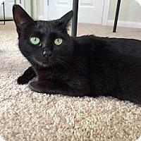 Adopt A Pet :: Aleida - San Diego, CA