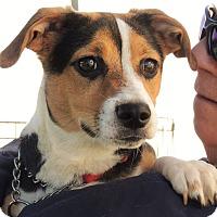 Adopt A Pet :: Luna - Lincolnton, NC