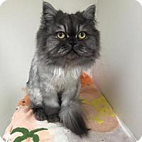 Adopt A Pet :: Thor - DFW Metroplex, TX