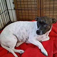 Adopt A Pet :: TIZZY - TAHOKA, TX
