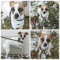Adopt A Pet :: Dale - Garden City, MI