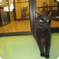 Adopt A Pet :: Little Bear - Gadsden, AL