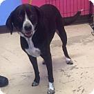 Adopt A Pet :: Lucille