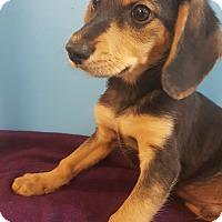 Adopt A Pet :: Henry~ meet me! - Glastonbury, CT