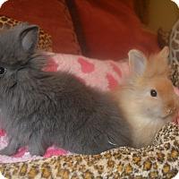Adopt A Pet :: Marshmellow- 1 lb - Warwick, NY