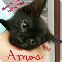 Adopt A Pet :: Amos - Fayetteville, WV