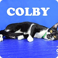 Adopt A Pet :: Colby - Carencro, LA