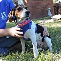 Adopt A Pet :: Meg - Berkeley Heights, NJ