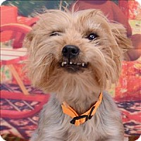 Adopt A Pet :: Bibi - Fort Davis, TX