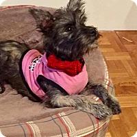 Adopt A Pet :: MILEE - Parsippany, NJ