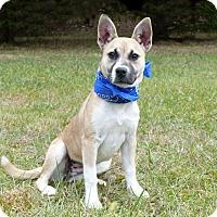 Adopt A Pet :: Darby - Mocksville, NC