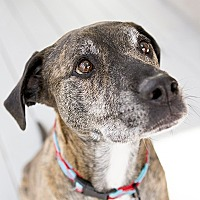 Adopt A Pet :: Donnie - Durham, NC