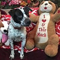 Adopt A Pet :: Ashton Kutcher - Toluca Lake, CA