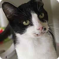 Adopt A Pet :: Bonnie - Fort Collins, CO
