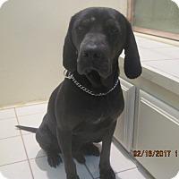 Adopt A Pet :: NICK - La Mesa, CA