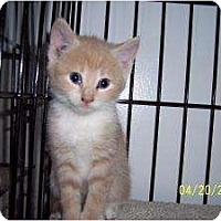 Adopt A Pet :: 5 Kittens! - Island Park, NY