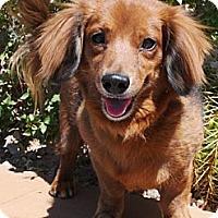 Adopt A Pet :: Fritter - Gilbert, AZ