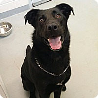 Adopt A Pet :: Brantley - Fort Riley, KS