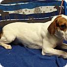 Adopt A Pet :: Burmeister