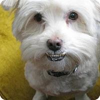 Adopt A Pet :: Ray - Montreal, QC