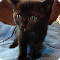 Adopt A Pet :: Wiggles - N. Billerica, MA