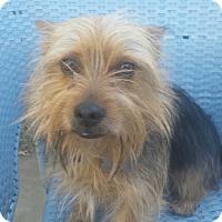 Adopt A Pet :: Henley - Lodi, CA