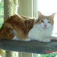Adopt A Pet :: Harry - Walnut Creek, CA