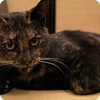 Adopt A Pet :: Sheila - Richmond, VA