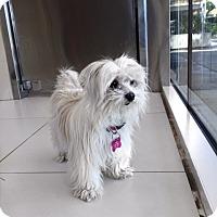 Adopt A Pet :: Charlotte - Orange, CA