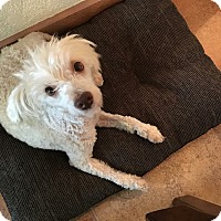 Adopt A Pet :: Betty - San Diego, CA