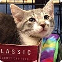 Adopt A Pet :: Lil - Gainesville, FL
