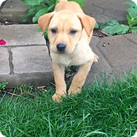Adopt A Pet :: Rayne Baby - New Oxford, PA