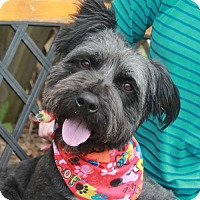 Adopt A Pet :: Prince-PENDING - Garfield Heights, OH