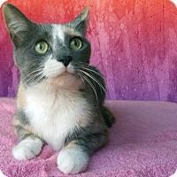 Adopt A Pet :: Maple - New Castle, PA
