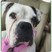 Adopt A Pet :: Bianaca - Brentwood, TN