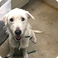 Adopt A Pet :: Misty - New Braunfels, TX