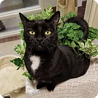 Adopt A Pet :: Giselle - Hendersonville, NC