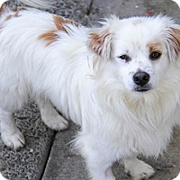 Adopt A Pet :: Bon - Yuba City, CA