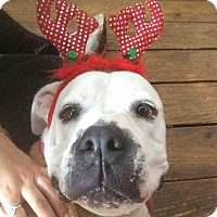 Adopt A Pet :: Hank - Tomball, TX