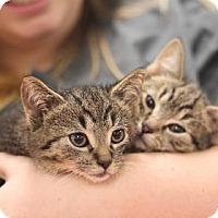 Adopt A Pet :: Finn - Philadelphia, PA