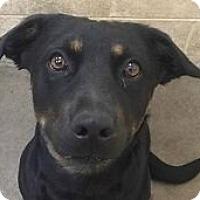 Adopt A Pet :: Liberty Bell - Springdale, AR