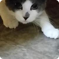 Adopt A Pet :: Erykah - Windsor, CT