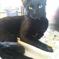 Adopt A Pet :: Me2 - Fort Pierce, FL