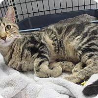 Adopt A Pet :: Eden - Reeds Spring, MO