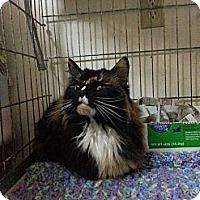 Adopt A Pet :: Kallie May - Walnut, IA