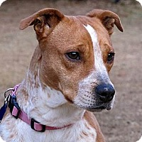 Adopt A Pet :: HOLLY-DOLLY - Phoenix, AZ