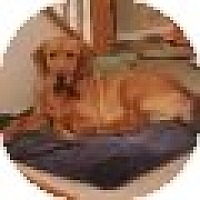 Adopt A Pet :: Blake - Denver, CO