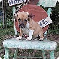 Adopt A Pet :: Schroeder - Roaring Spring, PA