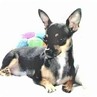 Adopt A Pet :: Pebbles - Mooy, AL