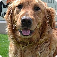 Adopt A Pet :: Lexi - Foster, RI